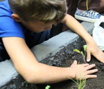 Community Center Gardening Activity
