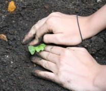 Community Center Gardening Hands