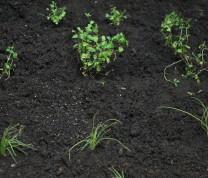 Community Center Gardening The Result Plants