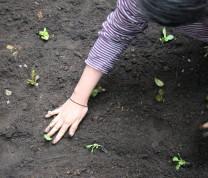 Community Center Gardening The Start