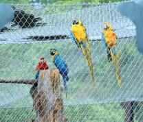 Community Center Wild Life Birds
