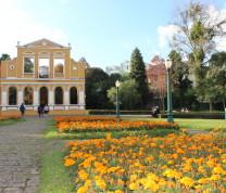 Curitiba Flower