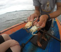 International Service Learning Crab