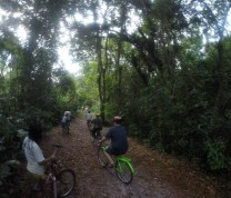 International Service Learning Program Bicycles Sun  Jungle