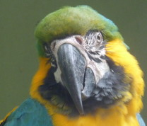 Wildlife Conservation Arara Parrot