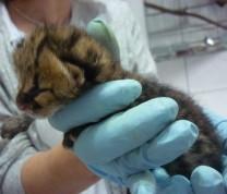 Wildlife Conservation Baby