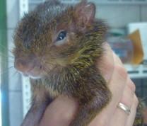 Wildlife Conservation Baby Squirrel