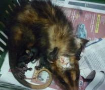 Wildlife Conservation Feeding Babies