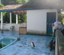 Wildlife Conservation Penguin