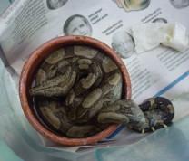 Wildlife Conservation Snake